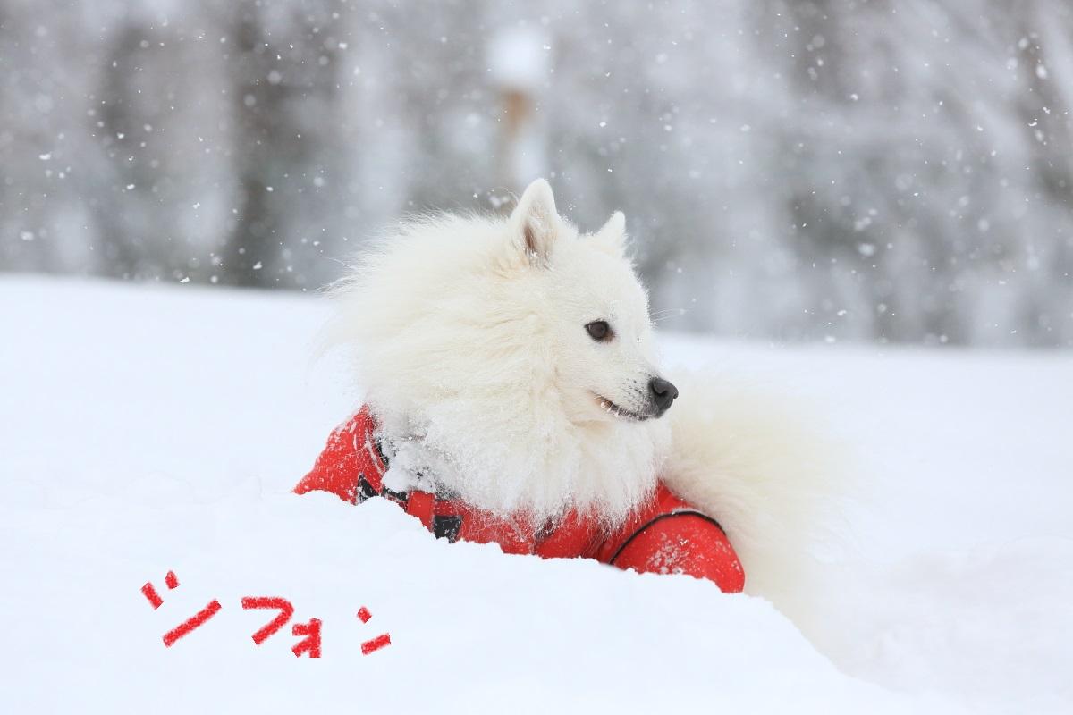 12_201412072011267f4.jpg