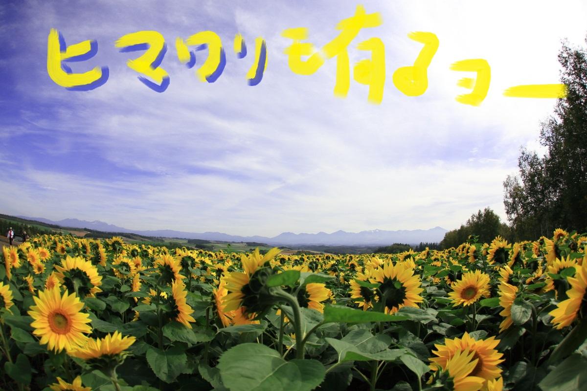 13_20141013221302433.jpg