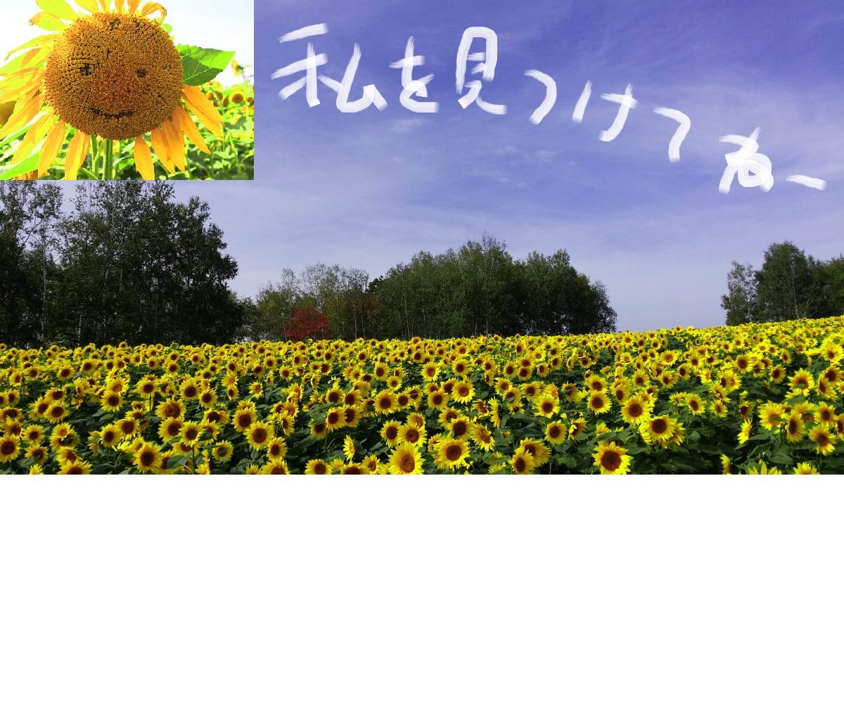 14_20141013221301c30.jpg