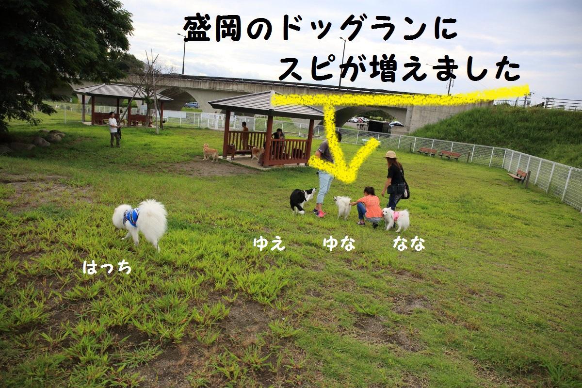 1_201312062012456e6.jpg