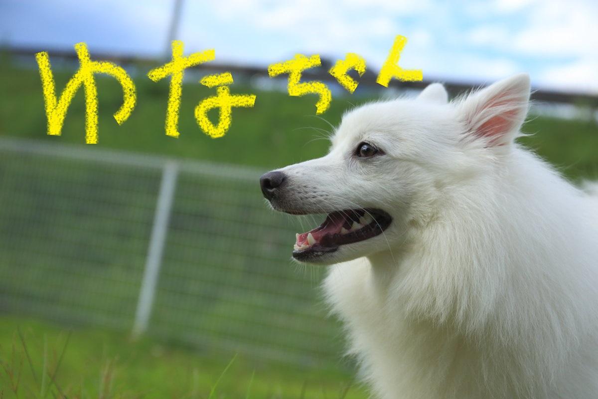 2_20131206201244de3.jpg