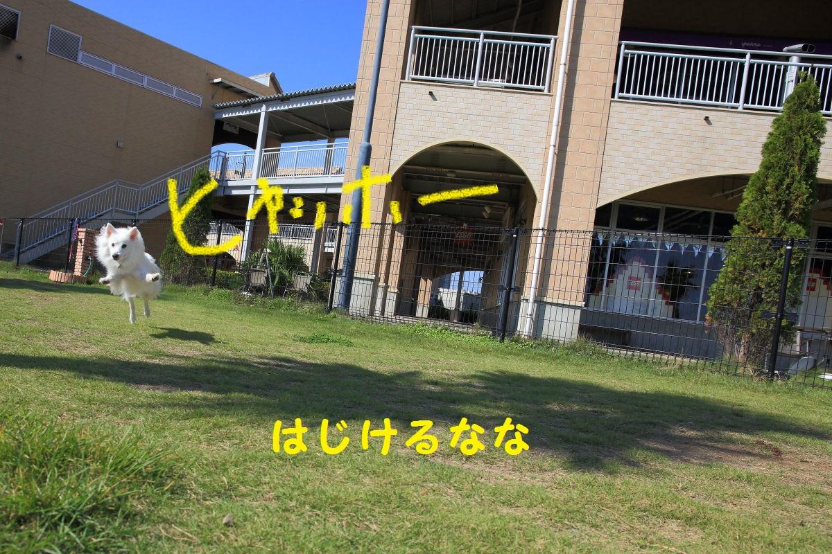 3_20131130084557b3a.jpg