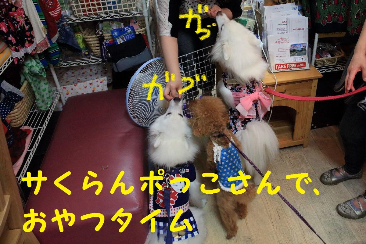 5_20131122194653e74.jpg