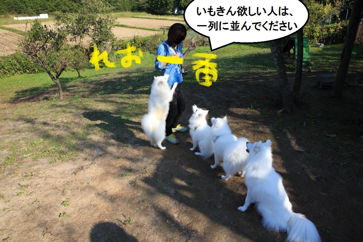 5_2014102419132266c.jpg