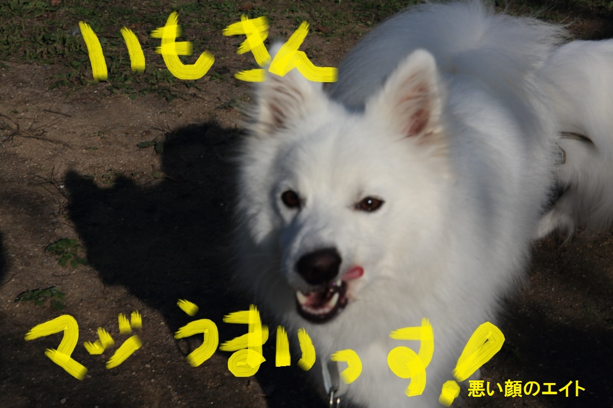 7_20141024191409f8a.jpg
