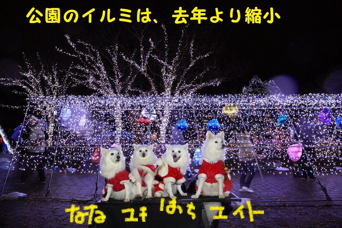 8_20131209212911fae.jpg