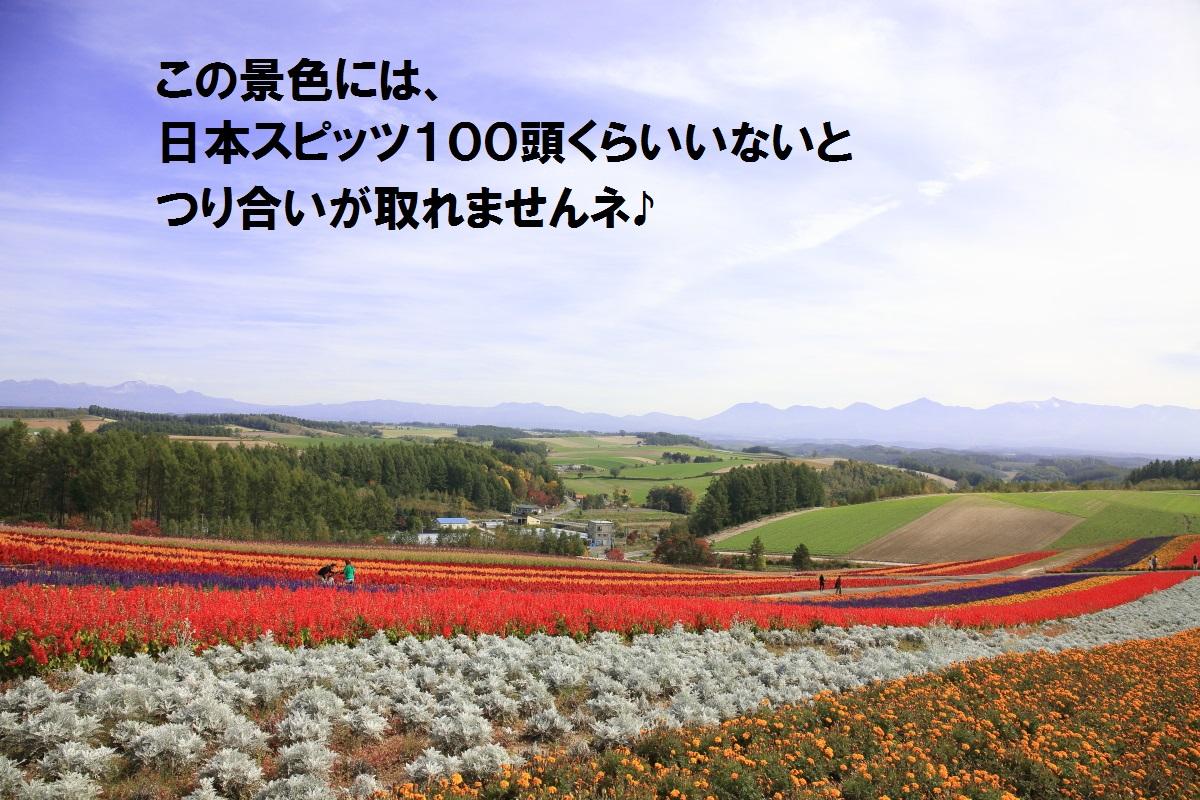8_201410132211341b3.jpg