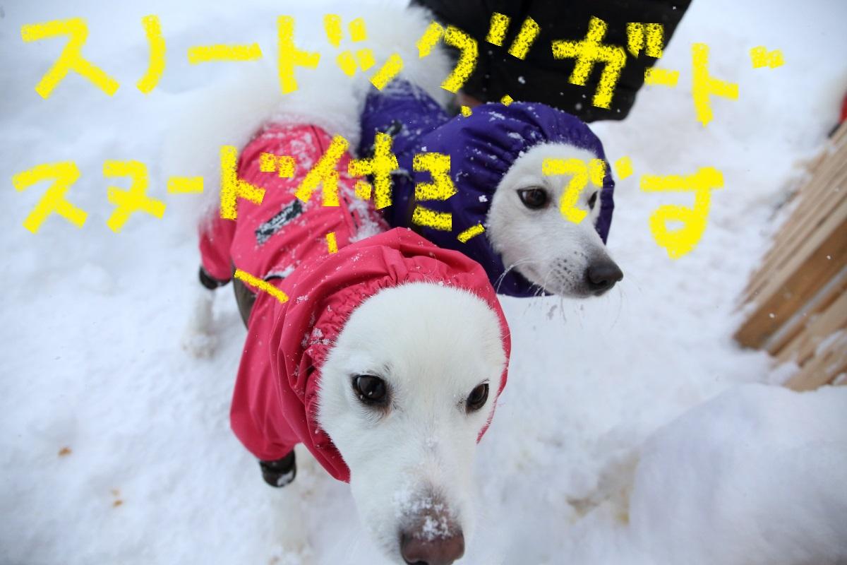 9_20141207201129841.jpg
