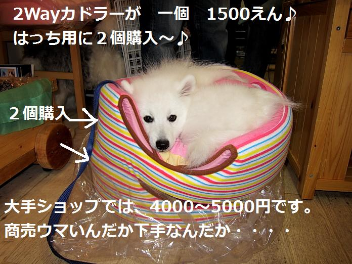 IMG_06552010.jpg