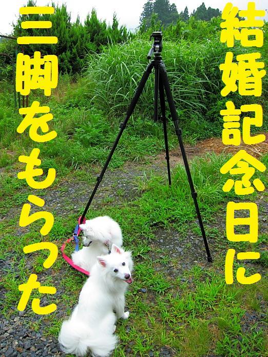 IMG_11682010.jpg