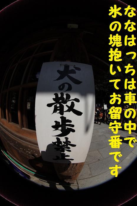 IMG_13682010.jpg