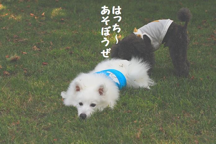 IMG_30082010.jpg