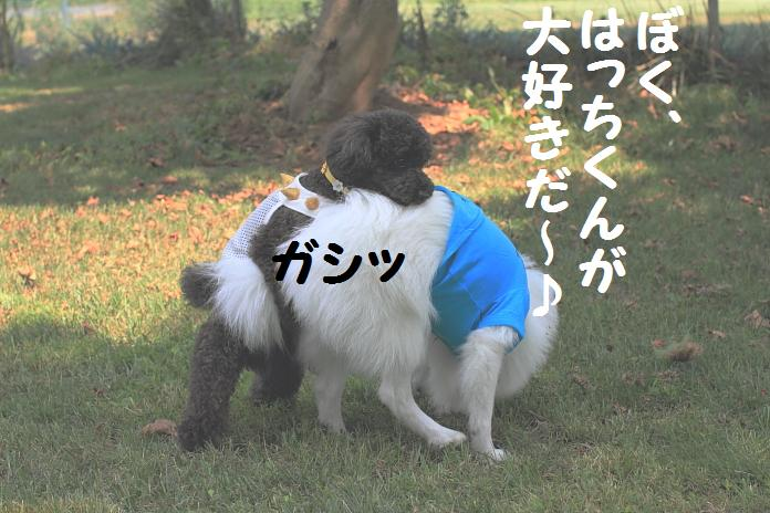 IMG_30422010.jpg