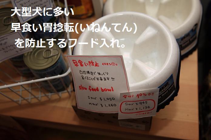 IMG_52052010.jpg