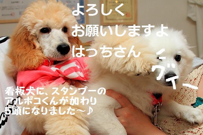 IMG_72412010.jpg