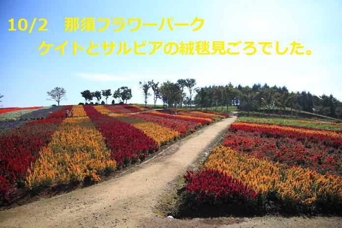 IMG_78292010.jpg