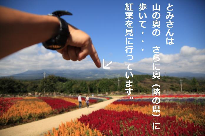 IMG_78482010.jpg