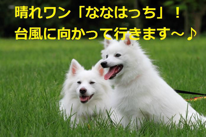 IMG_89142010-1.jpg