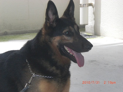 警察犬の「カール君」!!!