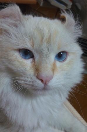 目がブルー
