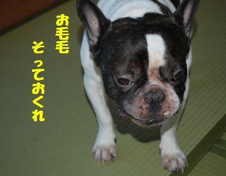 DSC_0008_20100802144316.jpg