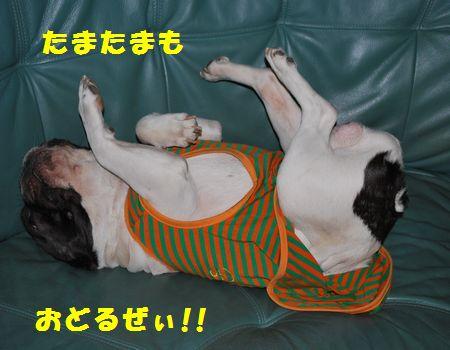 DSC_0015_20100616182916.jpg