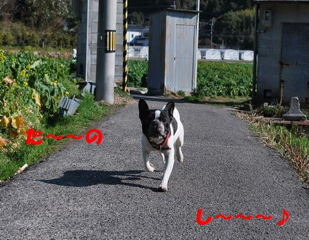 DSC_0019_20110311150435.jpg
