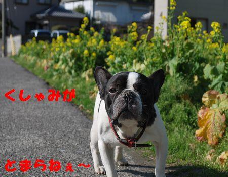 DSC_0039_20110329153218.jpg