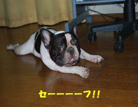 DSC_0058_20100912193840.jpg