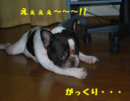 DSC_0059_20100912201810.jpg
