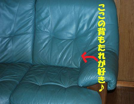 DSC_0068_20100912195255.jpg