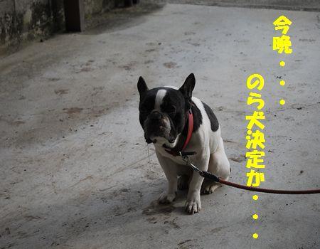 DSC_0111_20110404150447.jpg