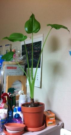 観葉植物4本