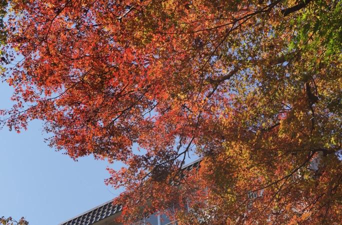 奥多摩 登計橋 上 紅葉20131117-2A
