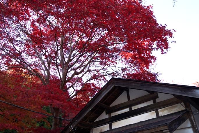 秩父東郷神社 紅葉-O 20131124A