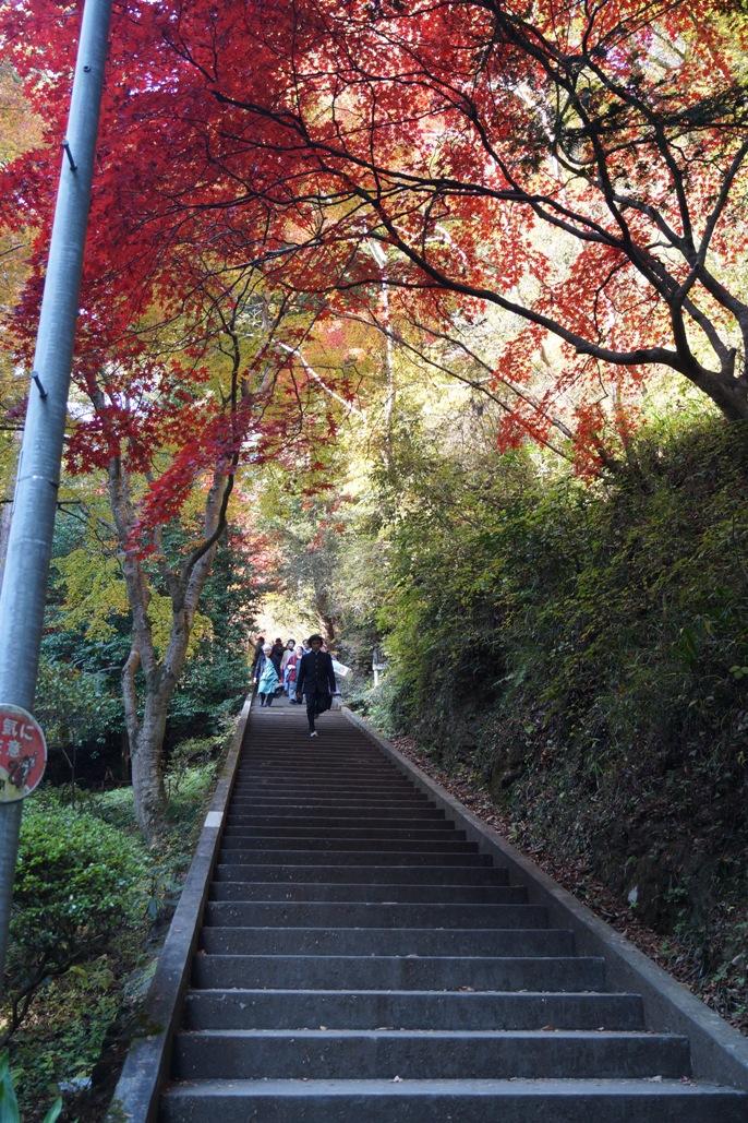 秩父御嶽神社 参道石段-2-20131124A