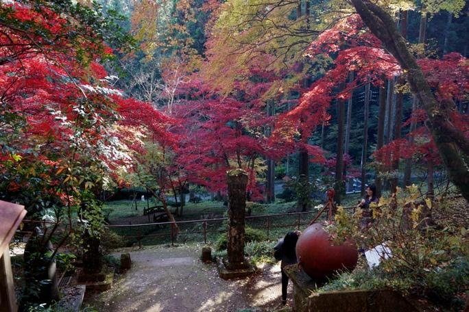 秩父御嶽神社 紅葉まつり 2-20131124A