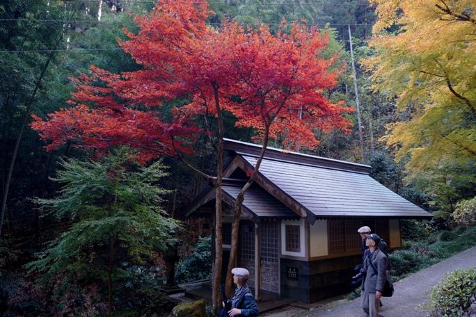 秩父御嶽神社紅葉祭り20131124.A