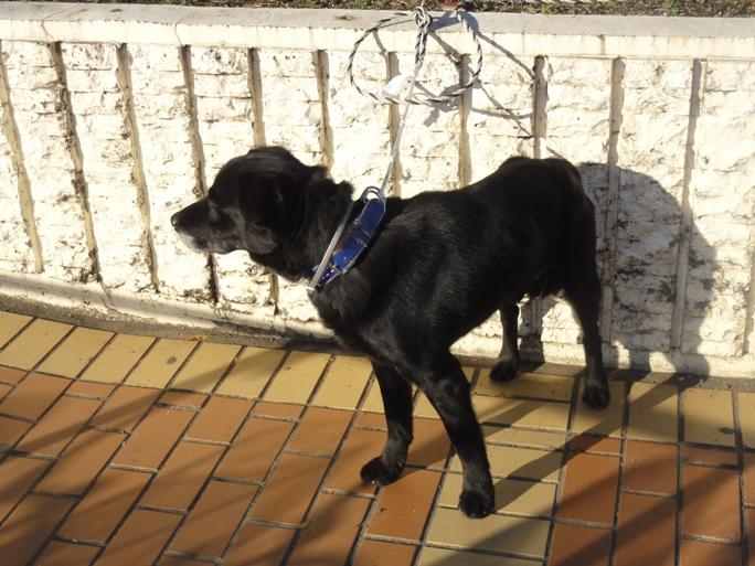 置き去り犬20131222-1A