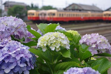 小湊鉄道 五井 キハ200
