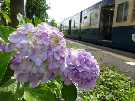 113系 紫陽花