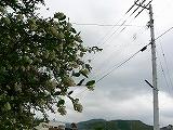 P2740009.jpg