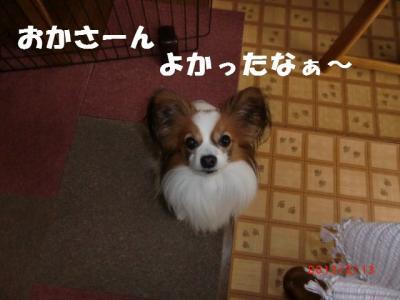 003_convert_20130305215218.jpg