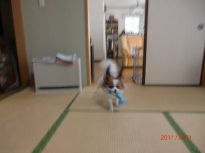 030_convert_20110401220743.jpg