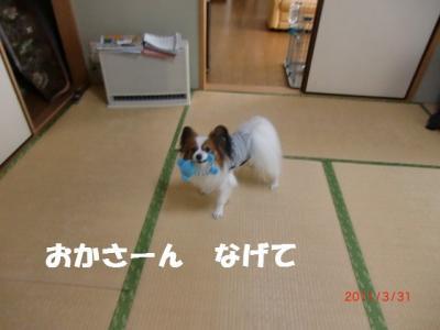 031_convert_20110401223609.jpg