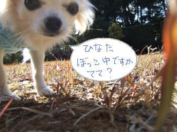 2011_0118去勢後抜糸0012_convert_20110120114110