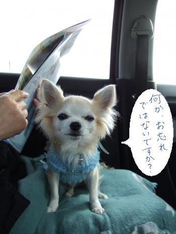 2011_0121京崎・田助釣り0008_convert_20110121220426