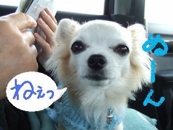 2011_0121京崎・田助釣り0009_convert_20110121220507