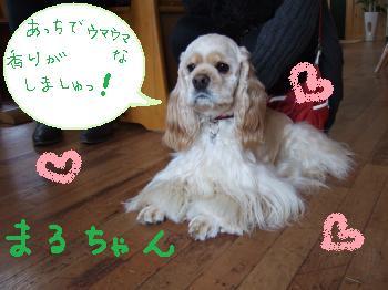 2011_0123美味しい菓子と新年会0023_convert_20110124100941