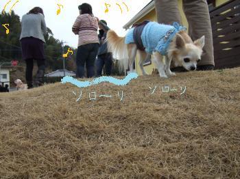 2011_0123美味しい菓子と新年会0032_convert_20110124101847